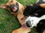 La evolución de los perros fue afectada por el cambio climático