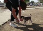 Niño refugiado caminó más 500 kilómetros junto a su perro