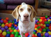 Video: perro recibe gran sorpresa el día de su cumpleaños