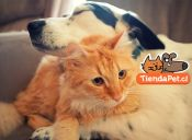 TiendaPet.cl, la tienda online que facilita el cuidado de tu mascota