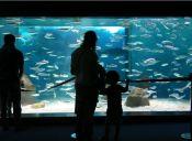 Mirar acuarios puede ser muy beneficioso para la salud