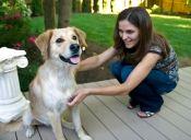 Pulgapp, la aplicación que te reencontrará con tu mascota perdida