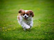 [Video] Un cachorro baila salsa para que lo adopten