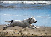 Perros de Gijón podrán ir a la playa con sus dueños