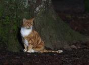 [Video] Un gato sorprende por su manera de sentarse