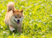 [Fotos] Maru es el mejor perro del mundo