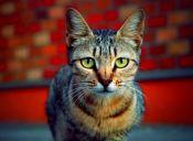 [Fotos] Los gatos tienen unos ojos muy atractivos
