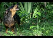 [Video] Parodian trailer de Jurassic World con perros salchichas