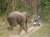 La ONU toma medidas para proteger a especies en peligro de extinción