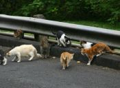 En Tasmania quieren prohibir la tenencia de gatos