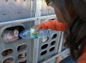 Animalista arriesga 10 años de cárcel por darle agua a unos chanchitos