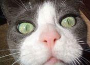 Gatos y perros pueden ser identificados gracias a su nariz