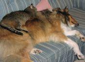 Investigadores descubren que la evolución del gato fue mejor que la del perro