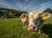 El Parlamento Europeo pretende prohibir la clonación industrial de animales