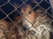 Animalistas buscan apoyo para terminar con el Festival de Carne de Perro