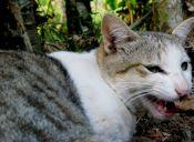Los gatos ferales pueden reconocer a sus familiares