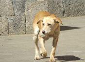 En isla mexicana sacrifican 15 mascotas a la semana