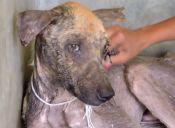 [Video] Impresionante cambio de un perro que dejó de ser callejero