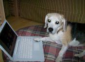 Los perros pueden identificar a sus dueños a través de una pantalla