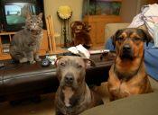 5 Ideas totalmente geniales para los dueños de perros (y gatos)