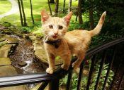 [Fotos] Un motociclista encontró una gato herido y se lo llevó de viaje