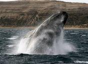 Marina de Estados Unidos limitará las pruebas de explosivos cerca de animales del mar