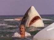 Hombre de 68 años es atacado por un tiburón en Estados Unidos