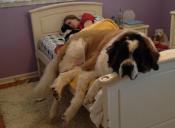 5 beneficios de dormir con tu perro