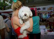 Los perros esquivan a las personas desagradables con sus dueños