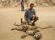 Animalistas de Tailandia piden una turismo responsable con los animales