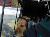 Veterinarios se harán cargo de las mascotas que llegue al aeropuerto de Barcelona