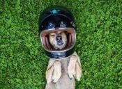 [Fotos] Maddie, la famosa perrita viajera