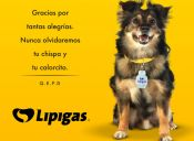 Miles de chilenos lloran la partida de Spike, el célebre