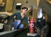 Aeropuerto de Nueva York inauguró baños exclusivos para mascotas