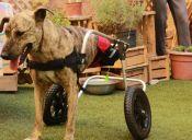 Refugio dedicado a animales discapacitados será desalojado: piden ayuda urgente