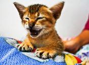 [Video] Un gato quedó atrapado en una sandalia