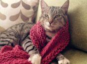 Nueva denuncia de gato presuntamente extraviado por una aerolínea