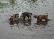 Animales de Panamá debieron ser salvados por la inundaciones