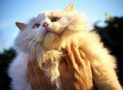 ¿Por qué agosto es el mes de los gatos?