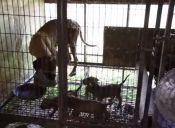 Animalistas salvan a 103 perros de granja en Corea del Sur