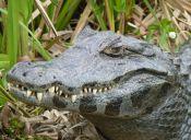 [Video] Niña se salva por poco de un ataque de cocodrilo