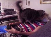 [Video] Una gata hace lo posible para lograr atención