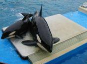 Ex trabajadora de SeaWorld revela espantosos detalles sobre maltrato animal en el parque
