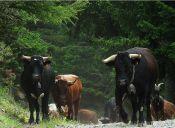 Animalistas españoles denuncia a autoridades por el tradicional Toro de La Vega