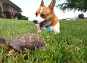 [Video] Turbo, un perro que se deja sorprender