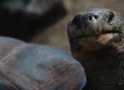 La última tortuga gigante: el Solitario George