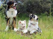 4 sorprendentes videos virales de perros