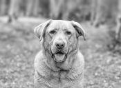Demencia senil en perros viejos