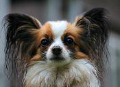 Videos virales de perros bailando