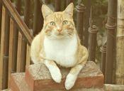 ¿Qué les pasa a las gatas en el mes de los gatos?